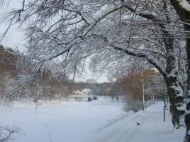 2011-01-05 Vinter 001 (1280x960)